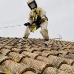 nid de frelon sur toit